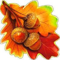 Праздник осени, листья дуба и желуди на скотче А-113-453